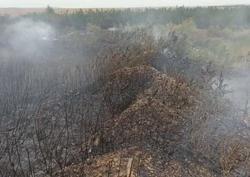 Лесной пожар тушили 20 человек