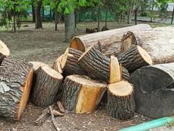 Детский парк, Омская, Сакко и Ванцетти. В Саратове согласовали снос деревьев