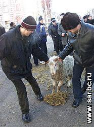 В России начинается продажа жертвенных баранов.