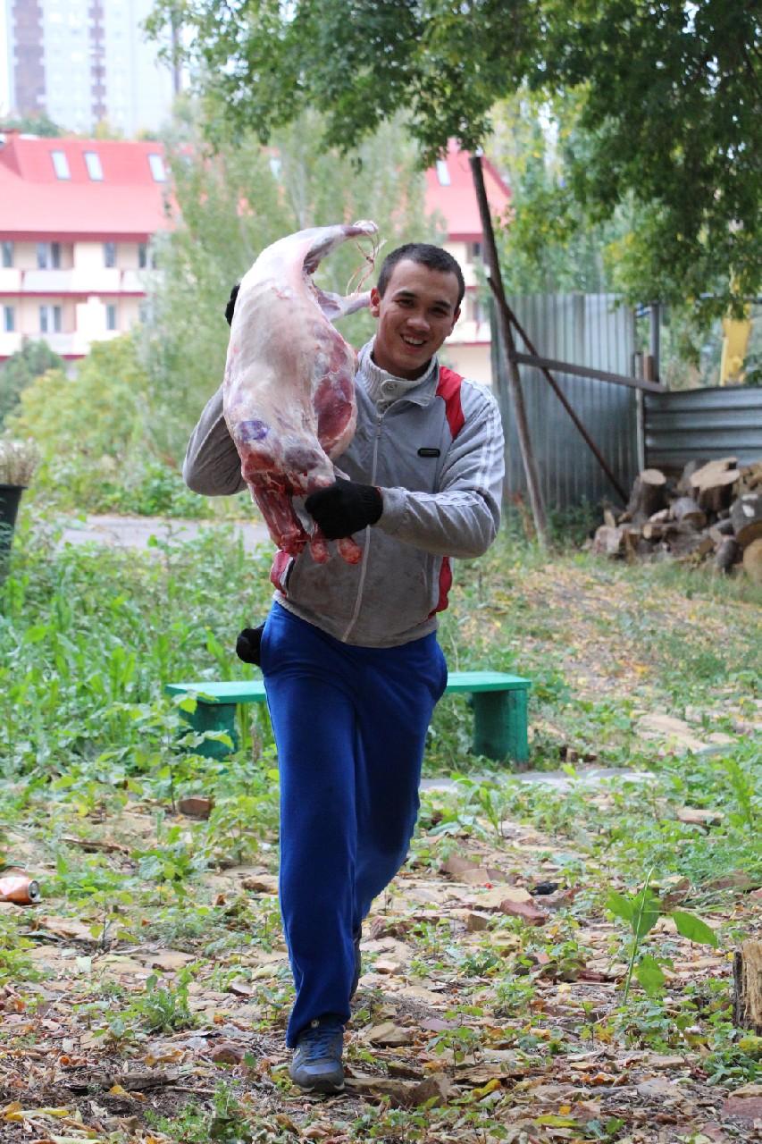 Рамзан Кадыров подарил саратовским мусульманам 1400 жертвенных баранов