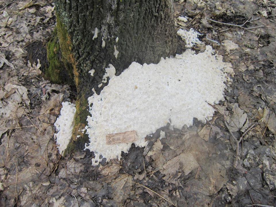 ВСаратове наКумысной поляне найдено 40-кратное превышение содержания хлоридов