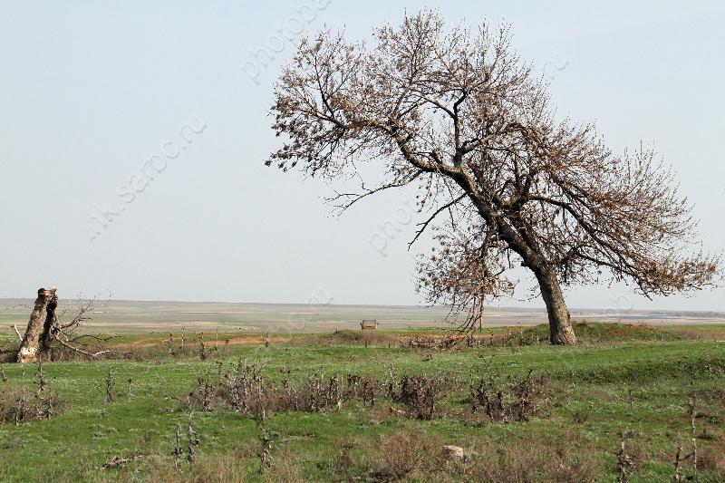 Синоптики предупреждают о непогоде и возможном падении деревьев