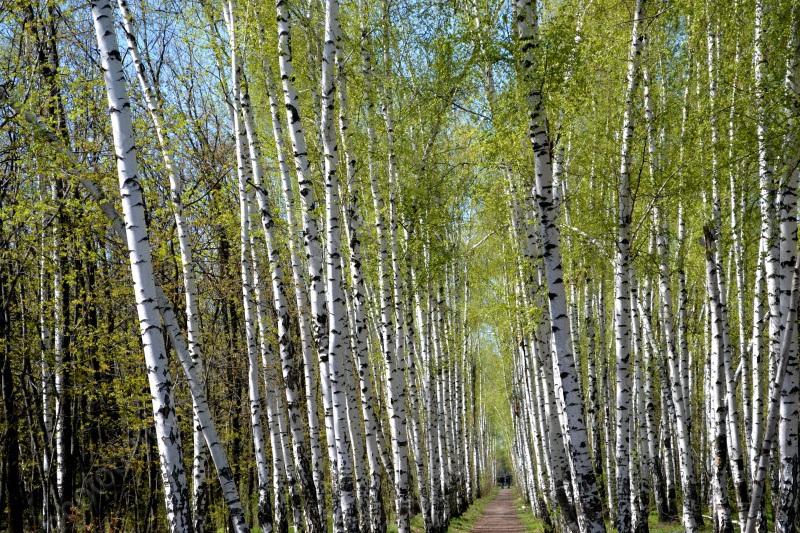 Генпрокуратура требует сделать наКумысной поляне Саратова лесничества