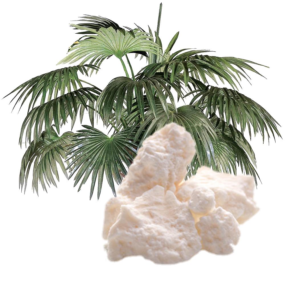 Импорт пальмового масла вРФ вследующем году превысит 850 тыс. тонн