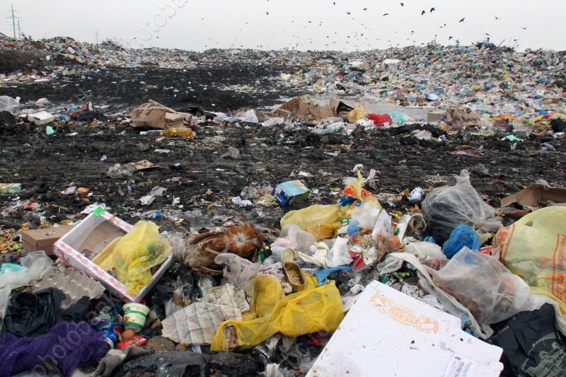 ВСаратовской области определились смероприятиями вГод экологии