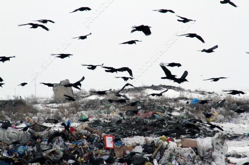 Врейтинге экологической эффективности Омск занял 16 место