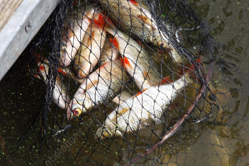 можно ли ловить рыбу на частных водоемах