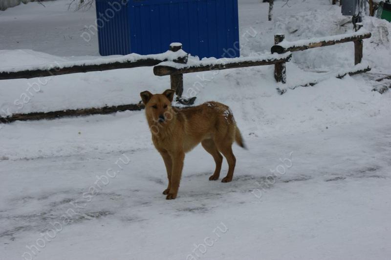 Гражданин Саратова расстреливал бродячих собак изружья