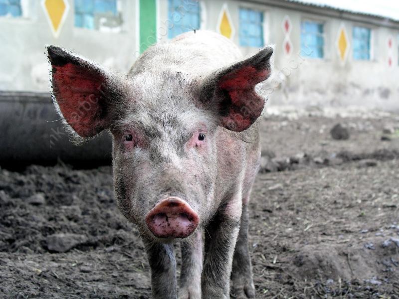 В 3-х населенных пунктах отменен карантин побешенству животных