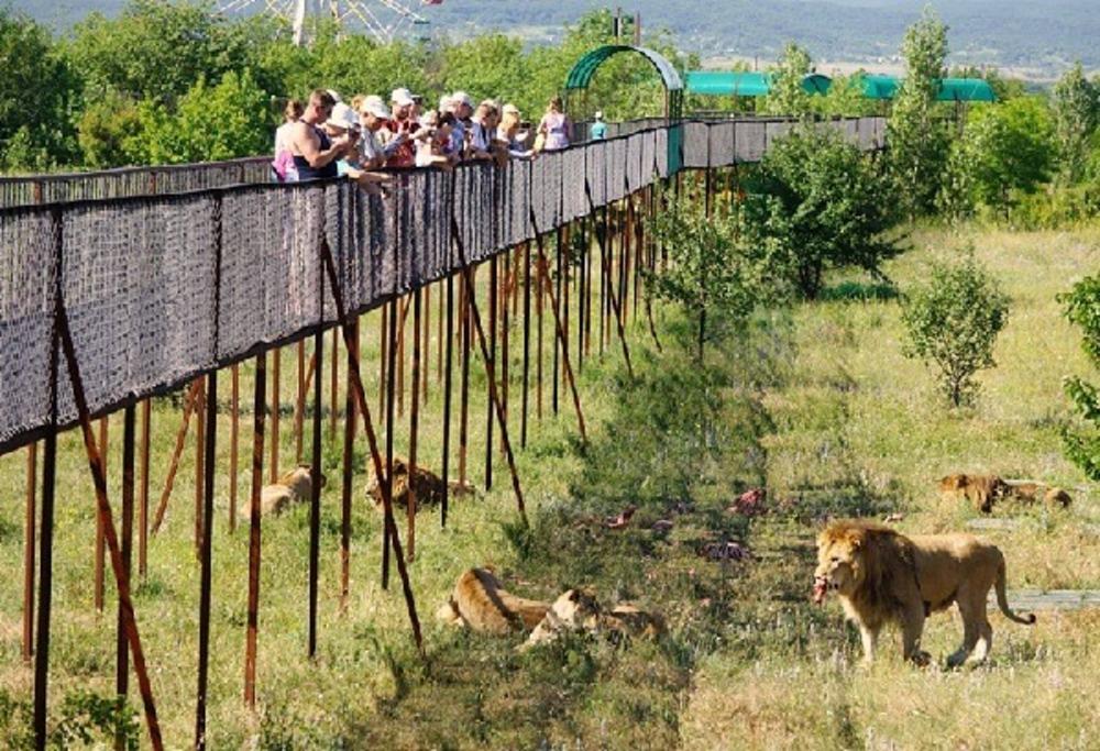 Львица Майя переедет вКрым
