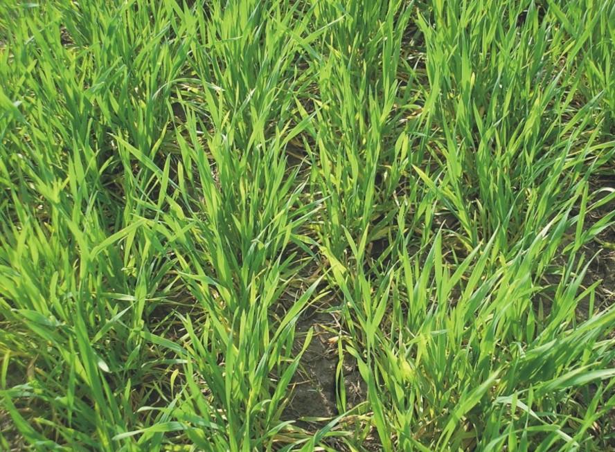 Урожай аграриев Самарской, Ульяновской иОренбургской областей взоне риска