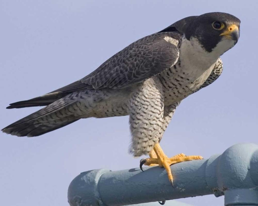 ВСаратове обнаружили сайт попродаже птиц изКрасной книги