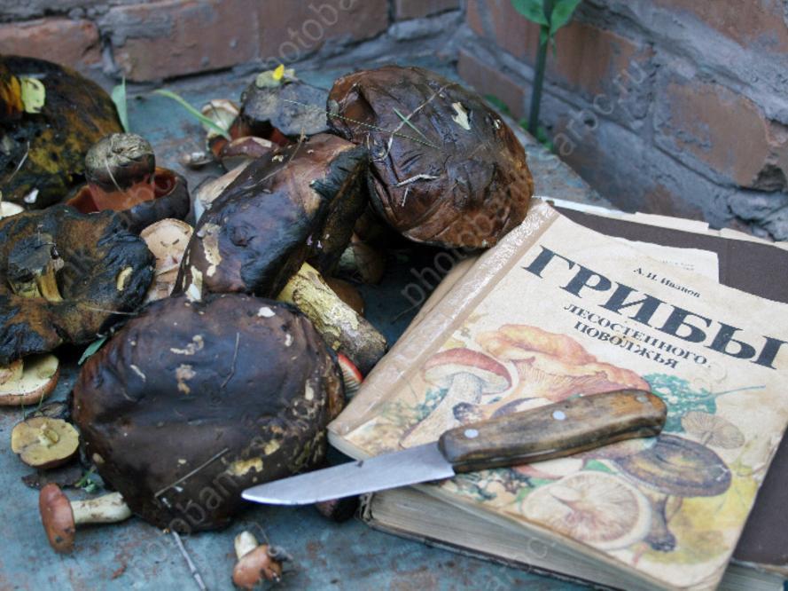 ВСаратовской области грибами отравились 8 человек