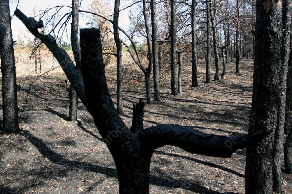 Почти сто человек тушили лесной пожар в Красноармейском районе