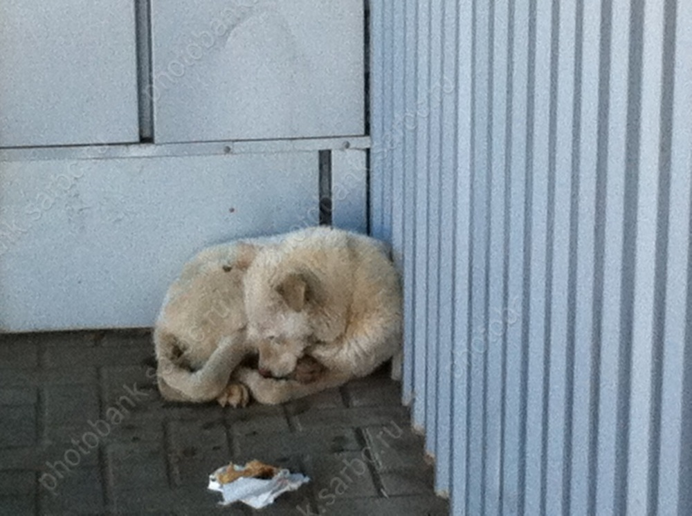 Избившего собаку живодёра приговорили к5 месяцам исправработ