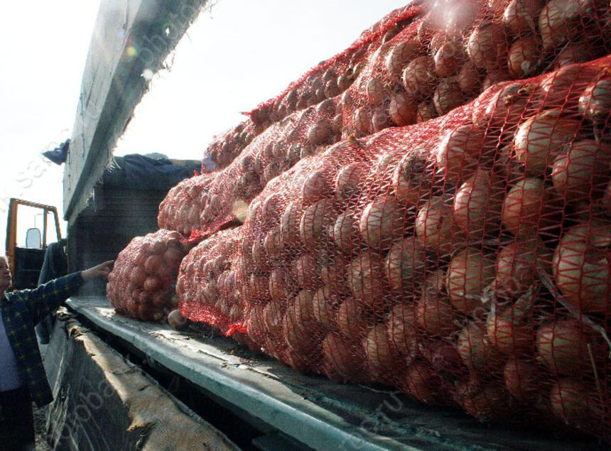 ИзСаратовской области невыпустили практически 40 тонн лука