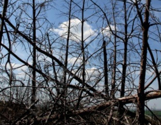 Генпрокуратура запретила стройку домов около озера Сазанка