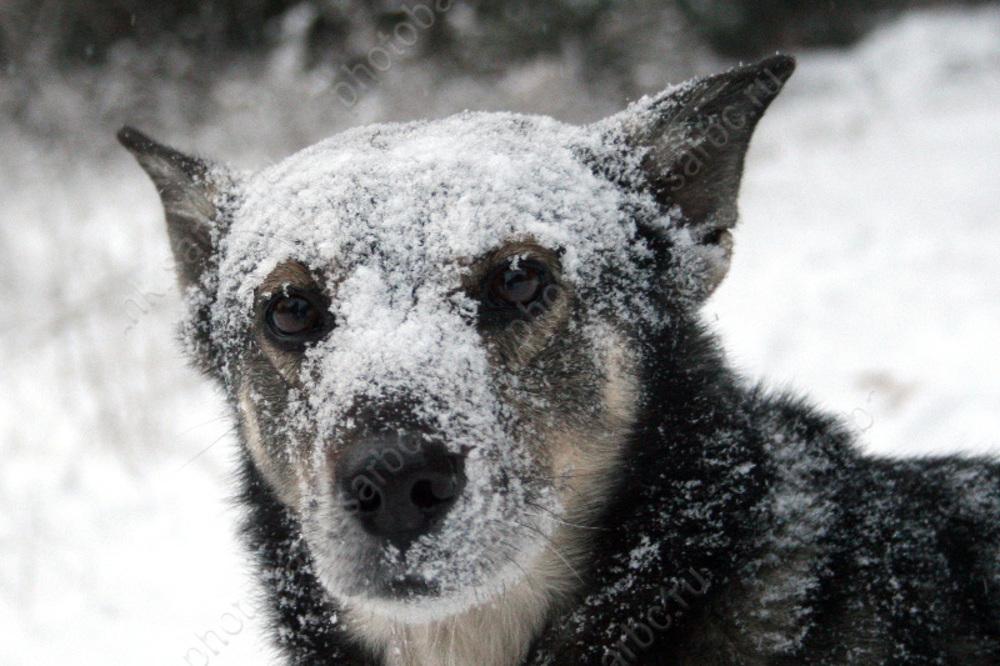 Аткарчан ожидают оттепель смокрым снегом итуман сплохой видимостью