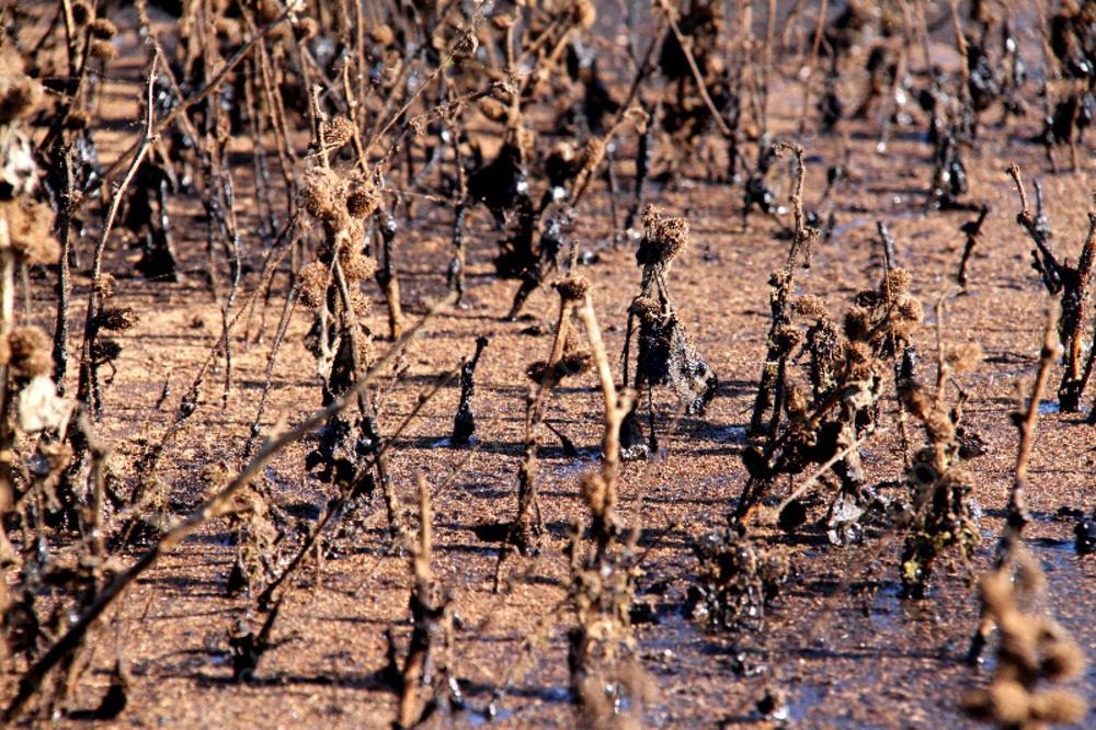 Уголовное дело возбудили пофакту загрязнения почвы нефтепродуктами