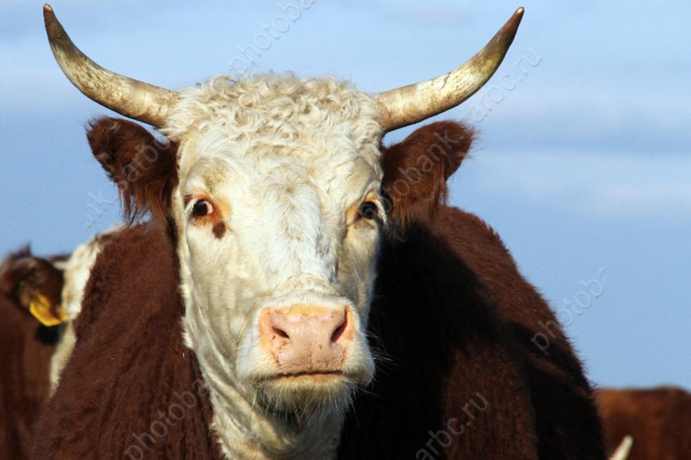 Карантин побешенству животных установили в2 поселках региона