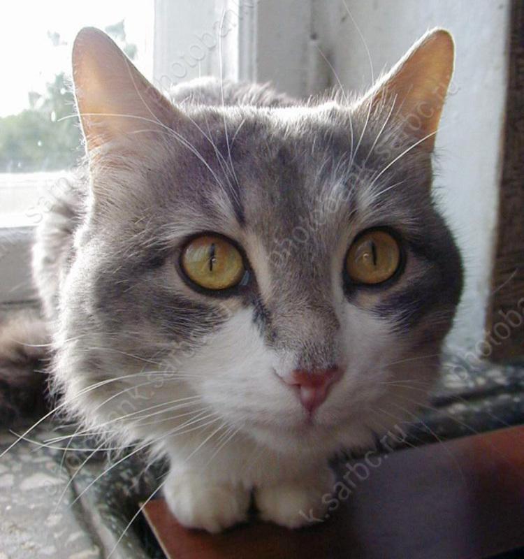 ВСаратове купленный взоомагазине кот заразил семью лишаем