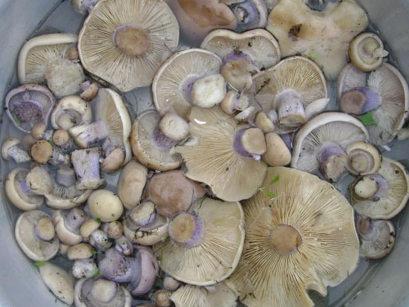 Вочто нельзя собирать грибы, чтобы неотравиться