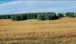 ЛЕСОСТЕПЬ переходная между лесной и степной природная зона, расположенная в северном умеренном поясе.
