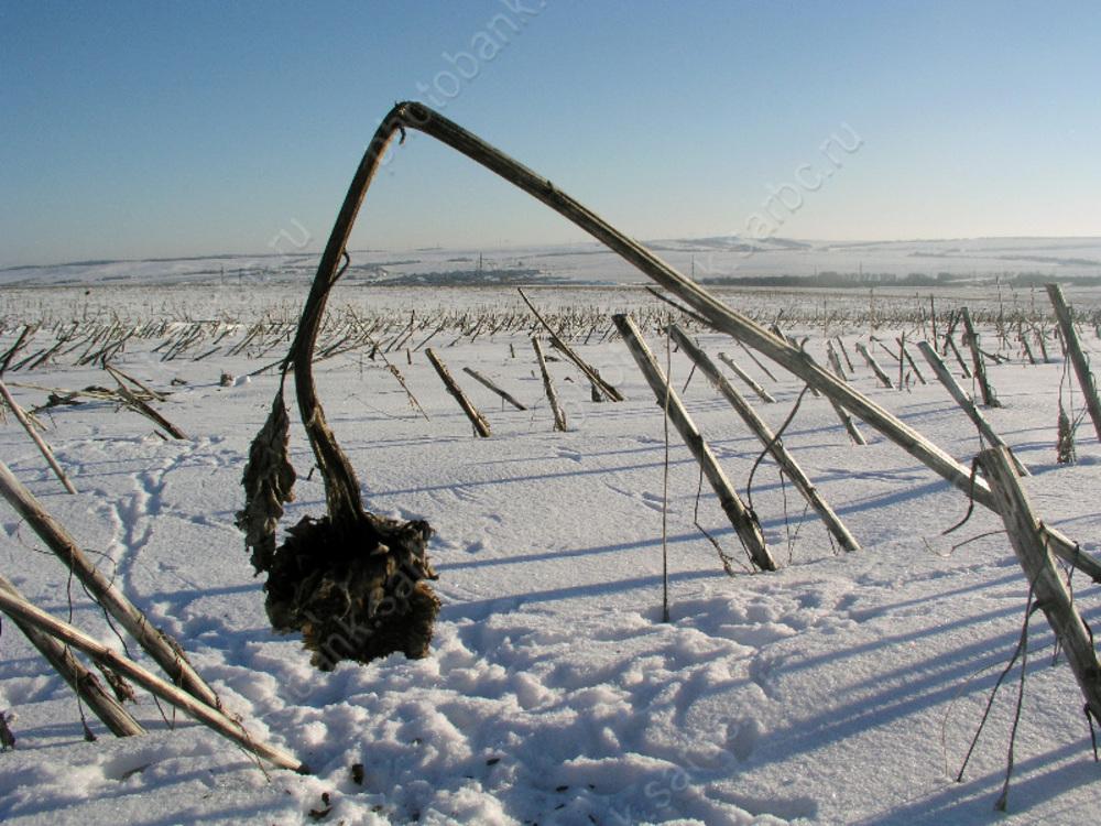Крепкие морозы в Саратове продержатся еще один день