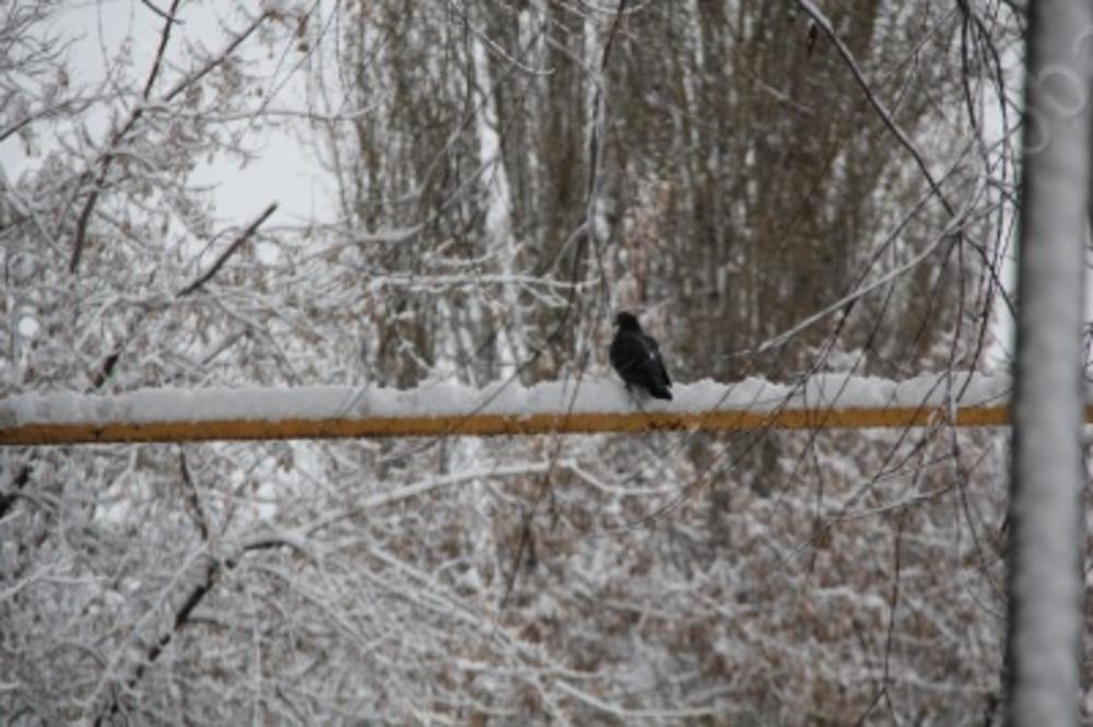 В Международный женский день в Саратове прогнозируют снегопад