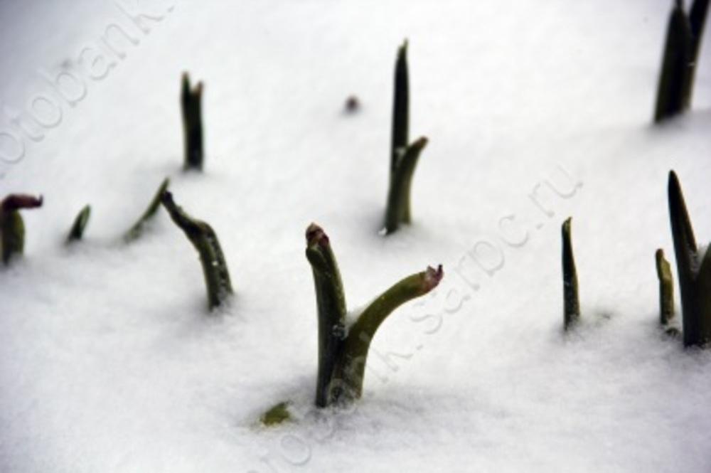 Морозы в Саратове снова усилятся