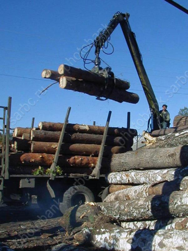 За продажу леса по бросовой цене своей жене глава госучреждения получил выговор